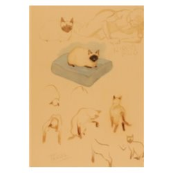 MUSEE - CARTE POSTALE - ILLUSTRATION - CHATS